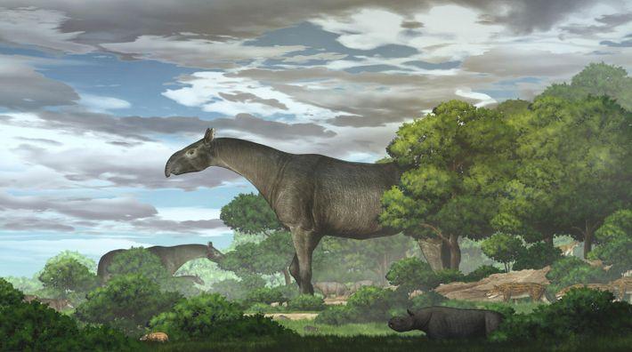 Paraceratherium linxiaense