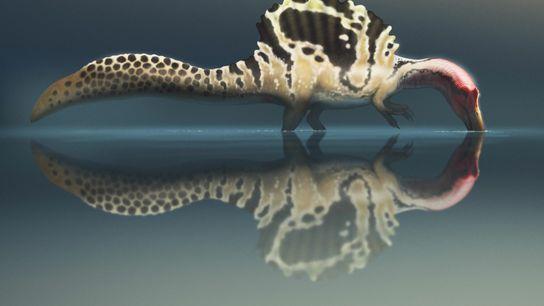 """O espinossauro era realmente um """"monstro do rio"""" que nadava ativamente? Neste longo debate científico, um ..."""