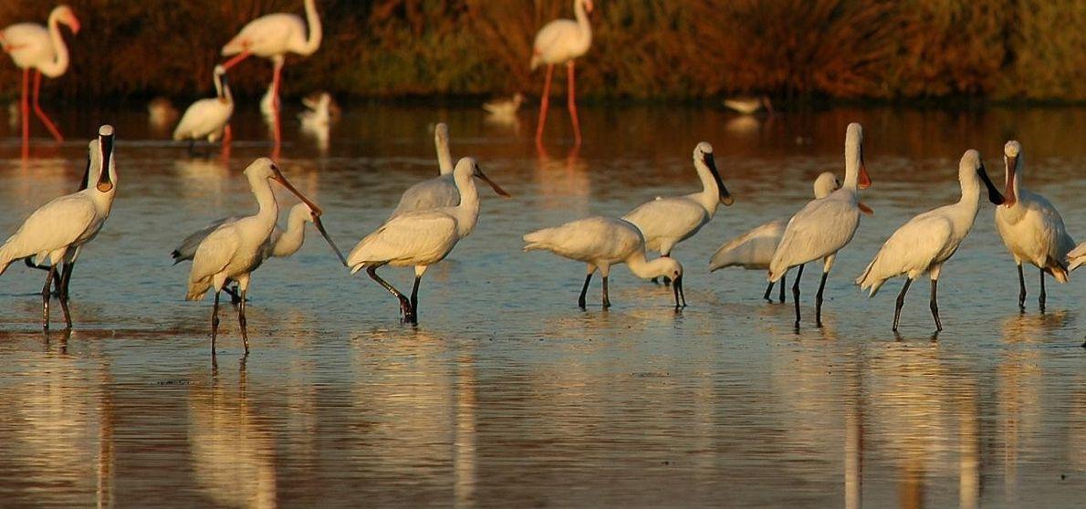 Flamingos e Perniliongos