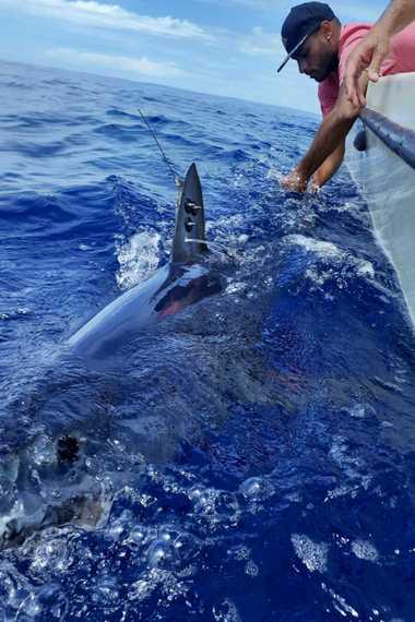 Marcação de tubarão