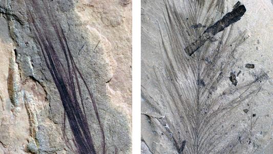 Inédito: Penas Fossilizadas de Dinossauro Encontradas Perto do Polo Sul