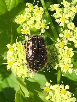 inseto numa planta