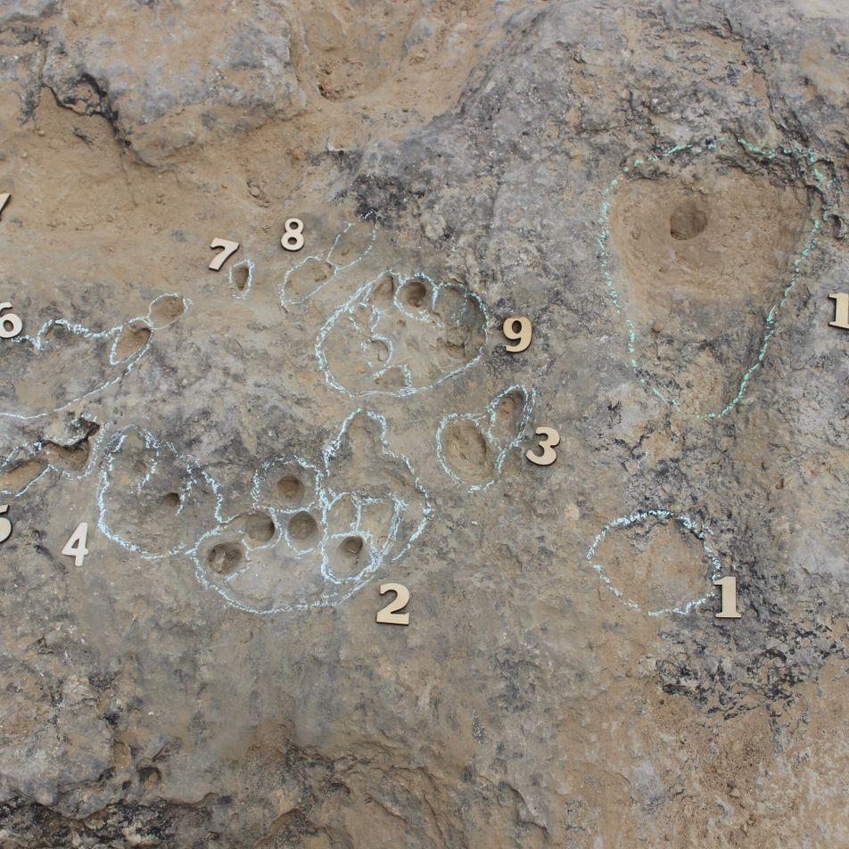 Cabo Espichel: encontradas pegadas de crocodilomorfos com 129 milhões de anos