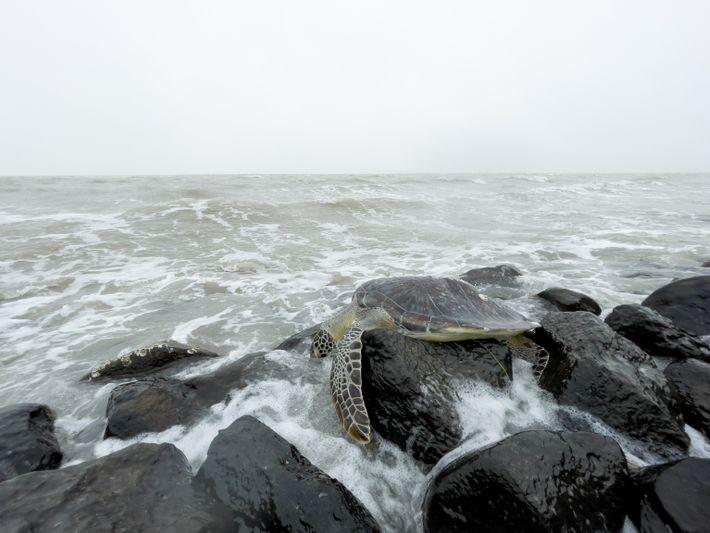 sea-turtles-texas-02