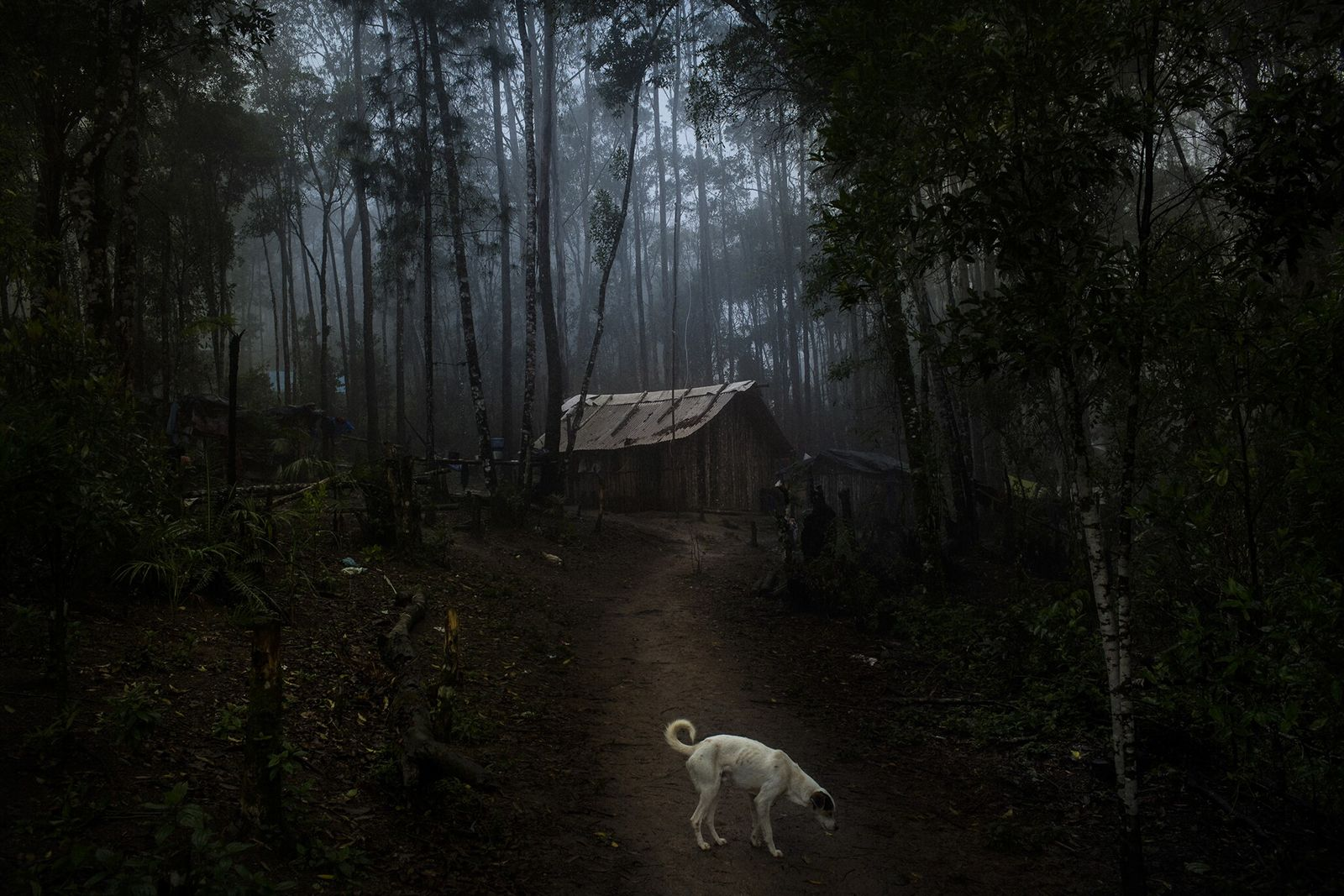 Sem terras, é difícil manter um idioma e uma cultura. Em 2017, as famílias Guarani estabeleceram ...