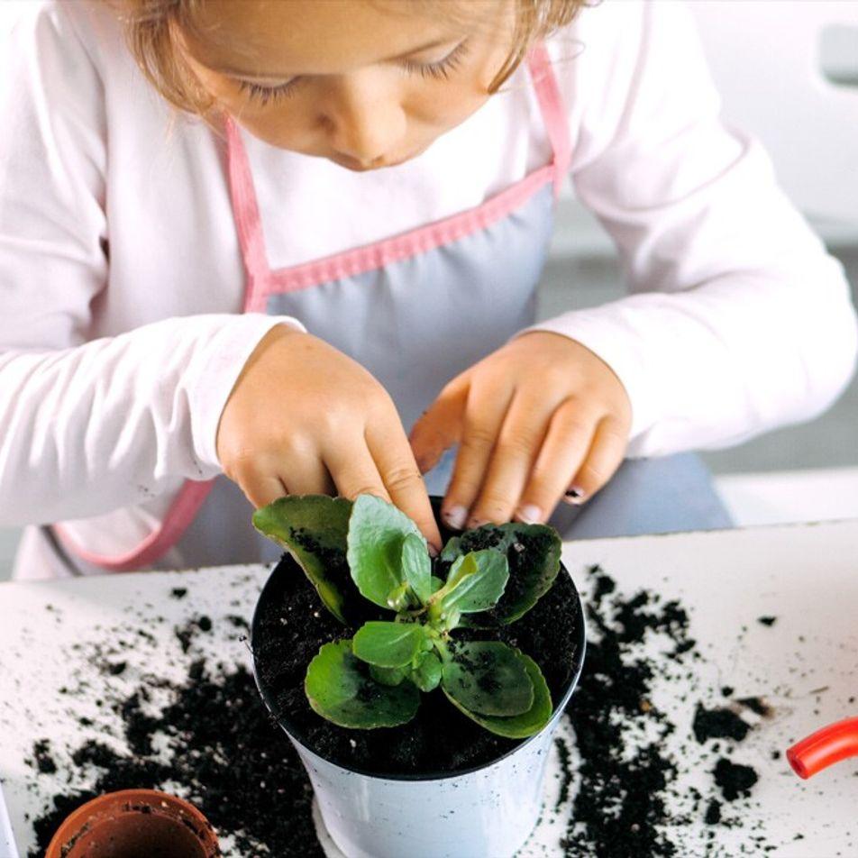 Tem saudades da natureza? Cultive com os seus filhos um jardim amigo do ambiente em casa.