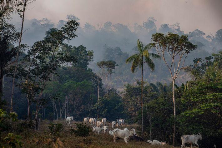 Em 2019, fumo de um incêndio florestal cobria uma quinta de gado no estado brasileiro de ...
