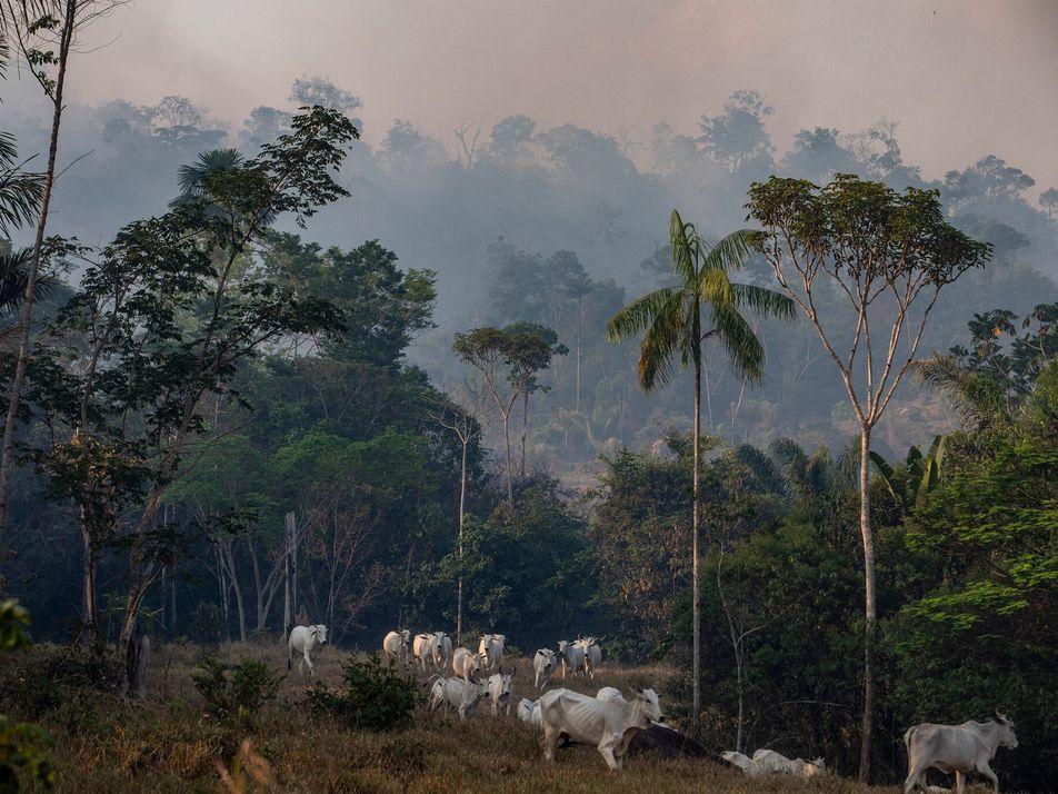 Relatório Afirma que a Proteção de Terras e Animais Pode Mitigar os Efeitos de Futuras Pandemias