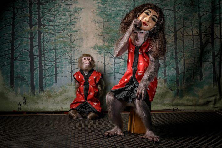 Quando os clientes terminam a sua refeição na Kayabuki Tavern, em Utsonomiya, no Japão, os macacos ...
