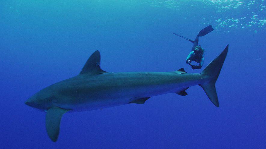 Cramp mergulha em águas habitadas por tubarões nas Galápagos.