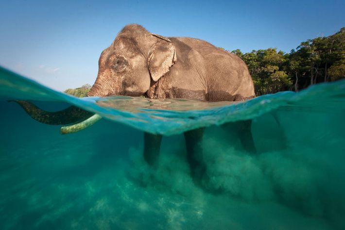 Jody MacDonald - elefante