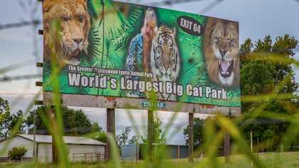 Zoo de 'Tiger King' Reabre com Grandes Multidões, Expondo Felinos a Coronavírus