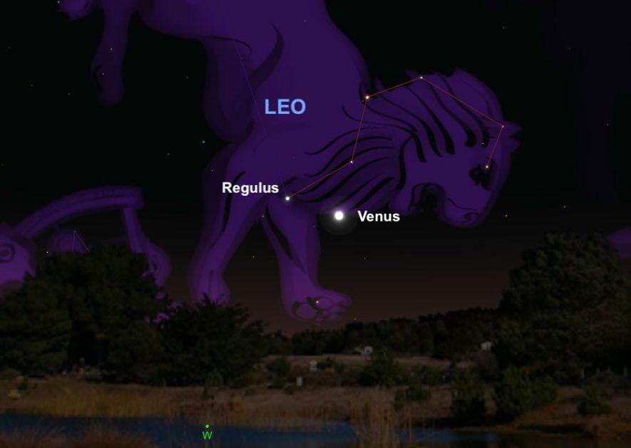 O brilhante planeta Vénus estará alinhado com Régulo, o coração da constelação de Leão, a 9 ...