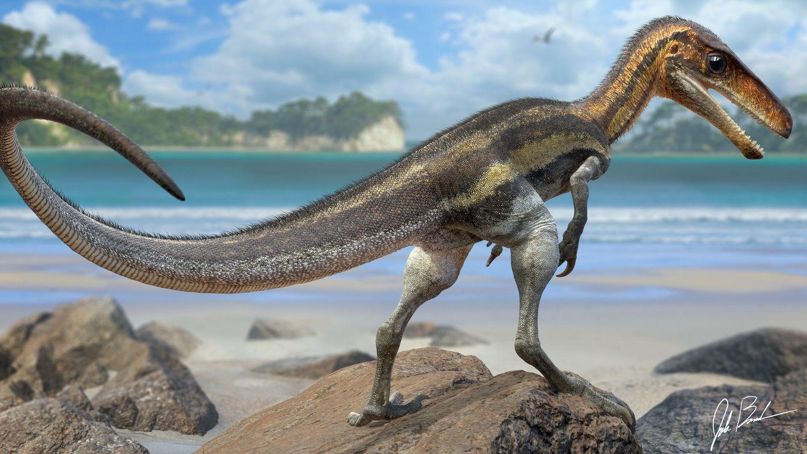 As escamas preservadas da cauda de um Juravenator – um pequeno dinossauro predador que viveu há ...