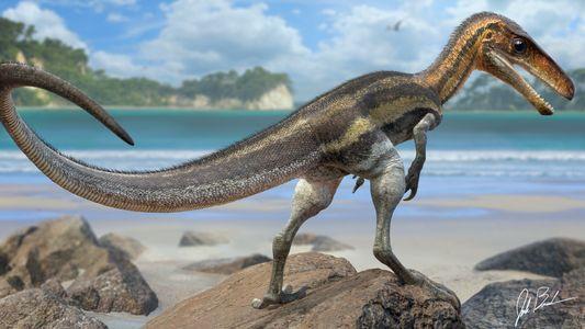 Fósseis Revelam Que Este Pequeno Dinossauro Tinha Um Senso Tátil Muito Apurado