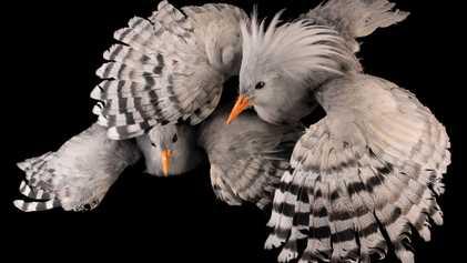Veja o Que Perdemos com a Extinção Animal