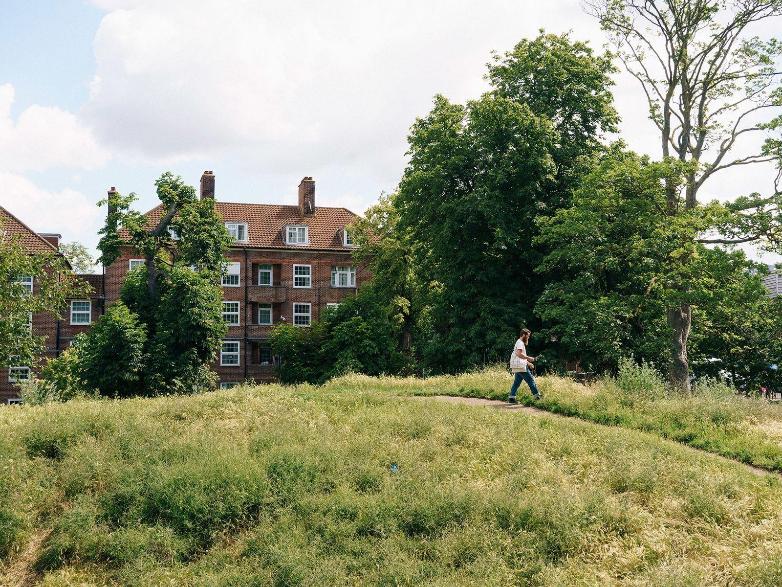 Wross Lawrence, forrageador profissional, apanha artemísia num parque em Londres. Esta planta tem um aroma semelhante ...