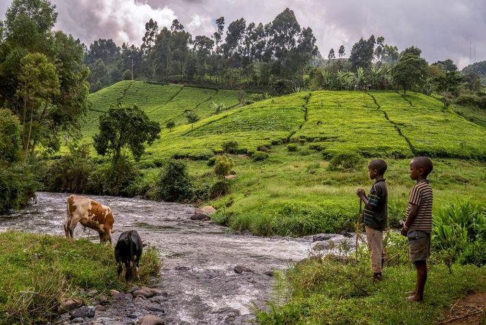 Dois rapazes vigiam o gado numa zona de convergência de dois braços do rio Mathioya.