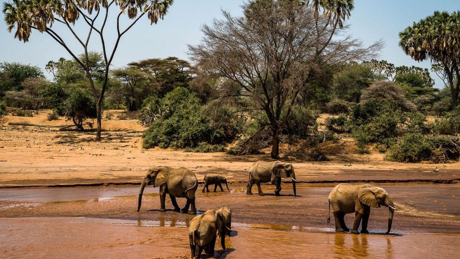 Uma manada de elefantes atravessa o rio Sarara, no Parque de Conservação da Vida Selvagem de ...