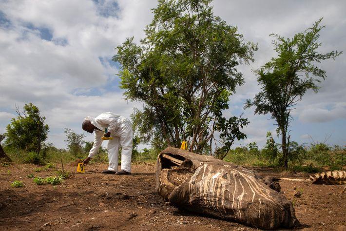 A organização Parques Nacionais da África do Sul, que gere o Parque Kruger, trabalha com especialistas ...