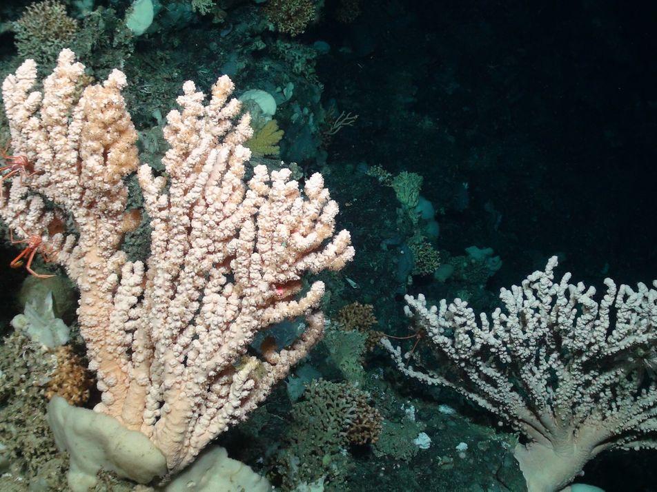 Cientista nacional à frente de investigação sobre mar profundo