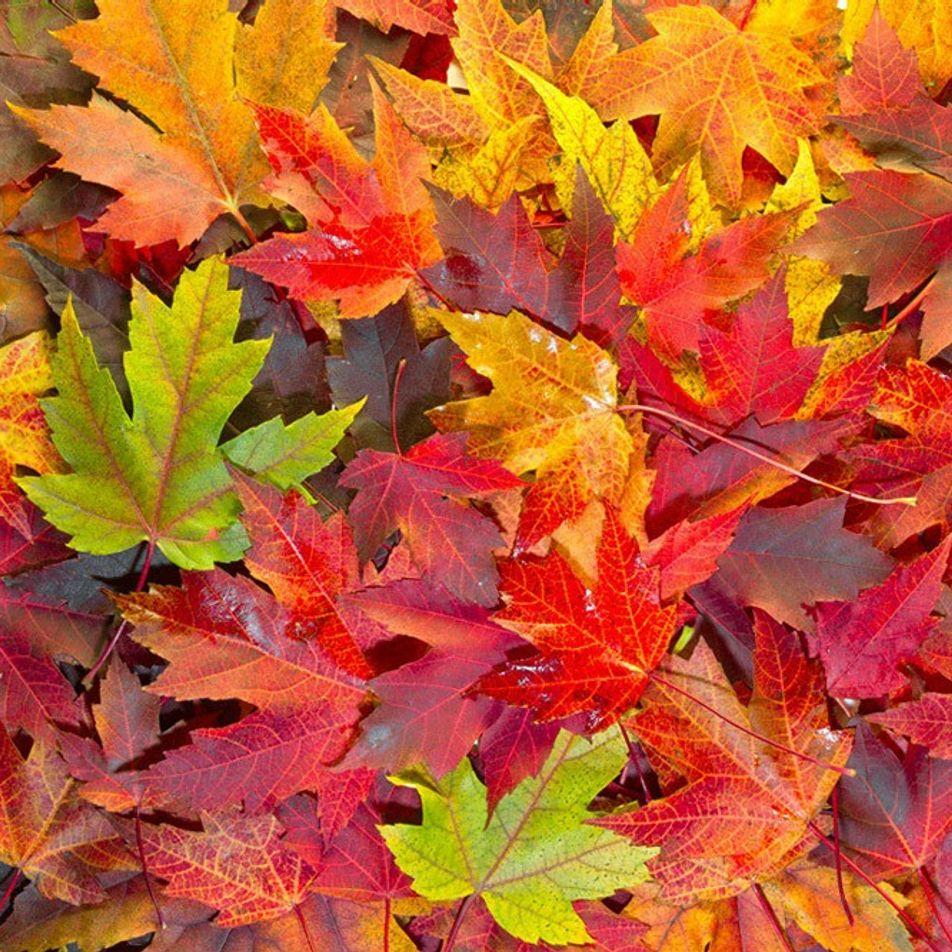 Quer Manter as Crianças Ocupadas Este Outono? Faça Algumas Destas Experiências Científicas com Folhas.