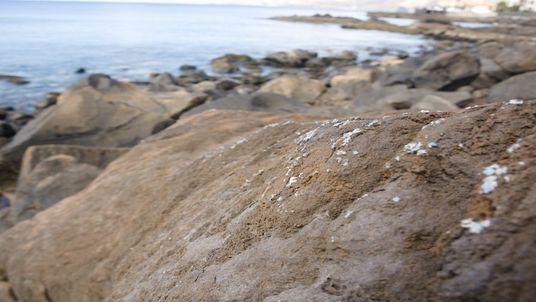 Novo Tipo de Lixo Marinho Invade a Madeira