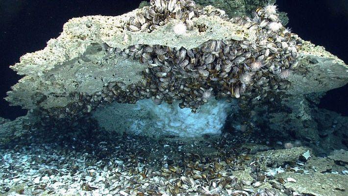 Nesta região das profundezas do Golfo do México, debaixo dos sedimentos do fundo do mar, existe ...