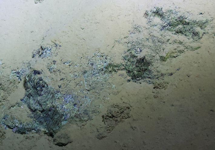 Em 2012, durante a expedição DEEPSEA CHALLENGE na Fossa das Marianas, foram observadas estruturas filamentosas que ...
