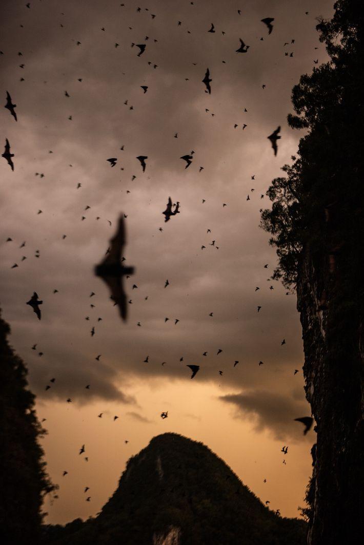 No Bornéu, a 'Caverna dos Veados' abriga mais de 2 milhões de morcegos de várias espécies ...