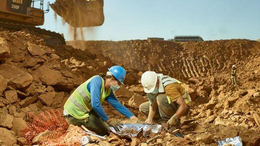 Fósseis de primatas de valor incalculável encontrados em lixeira