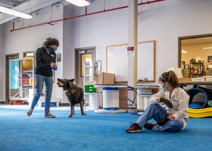 Cynthia Otto, diretora do Centro Operacional de Cães, trabalha com Rico, um pastor alemão. Cynthia acredita ...