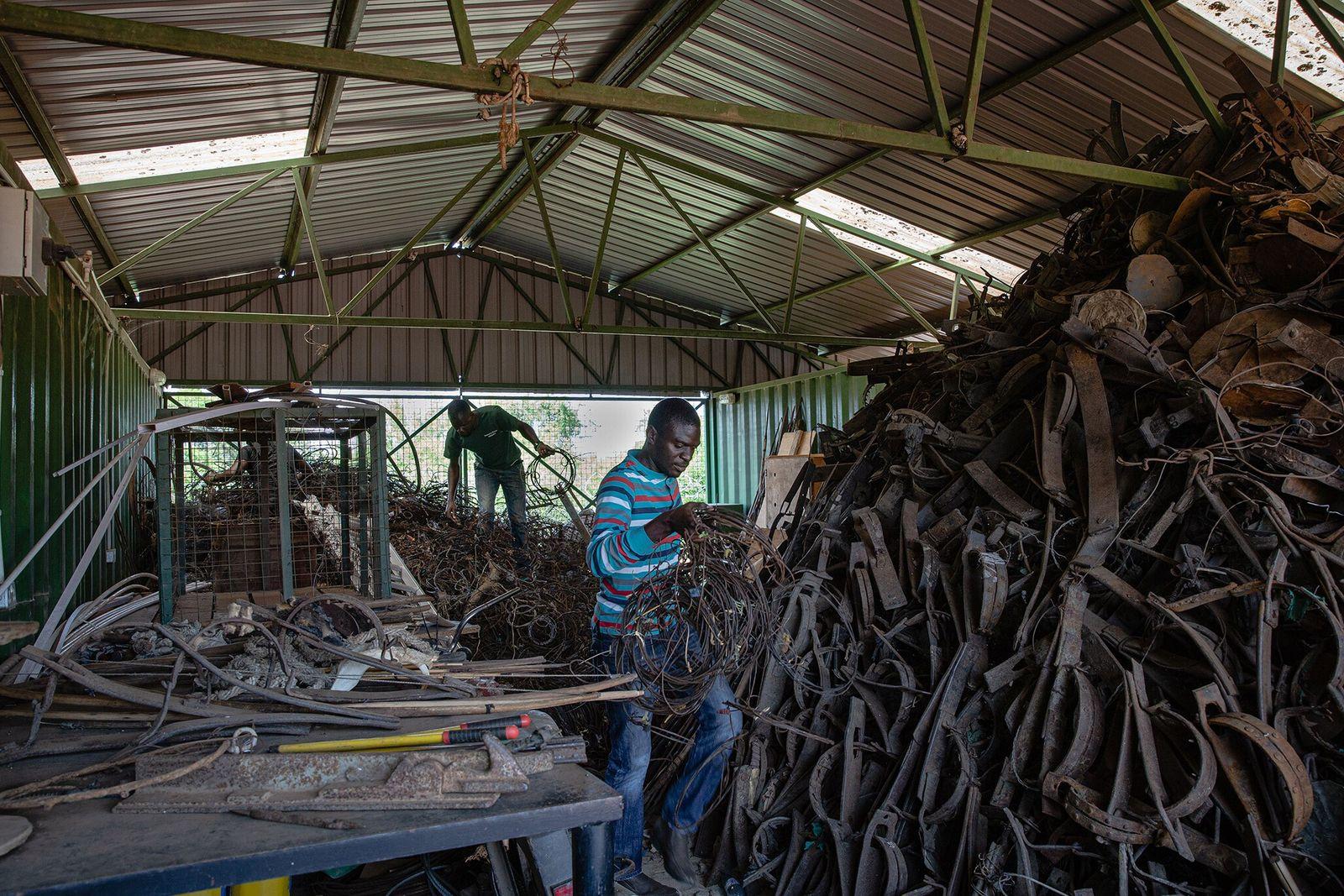 Os funcionários da Snare to Wares classificam as armadilhas no armazém da Autoridade de Vida Selvagem ...
