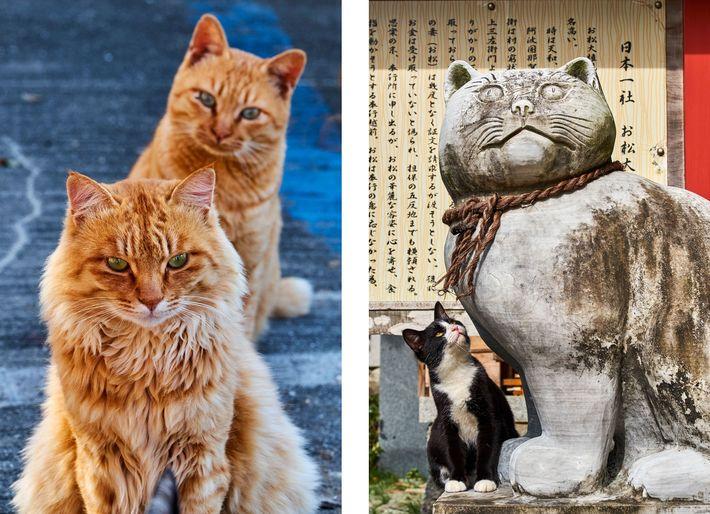 """Esquerda: Um gato malhado cor de laranja a olhar curiosamente para outro numa """"ilha de gatos"""" ..."""