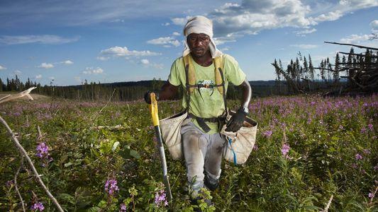 Plantar Árvores É um Rito de Passagem para Jovens Canadianos