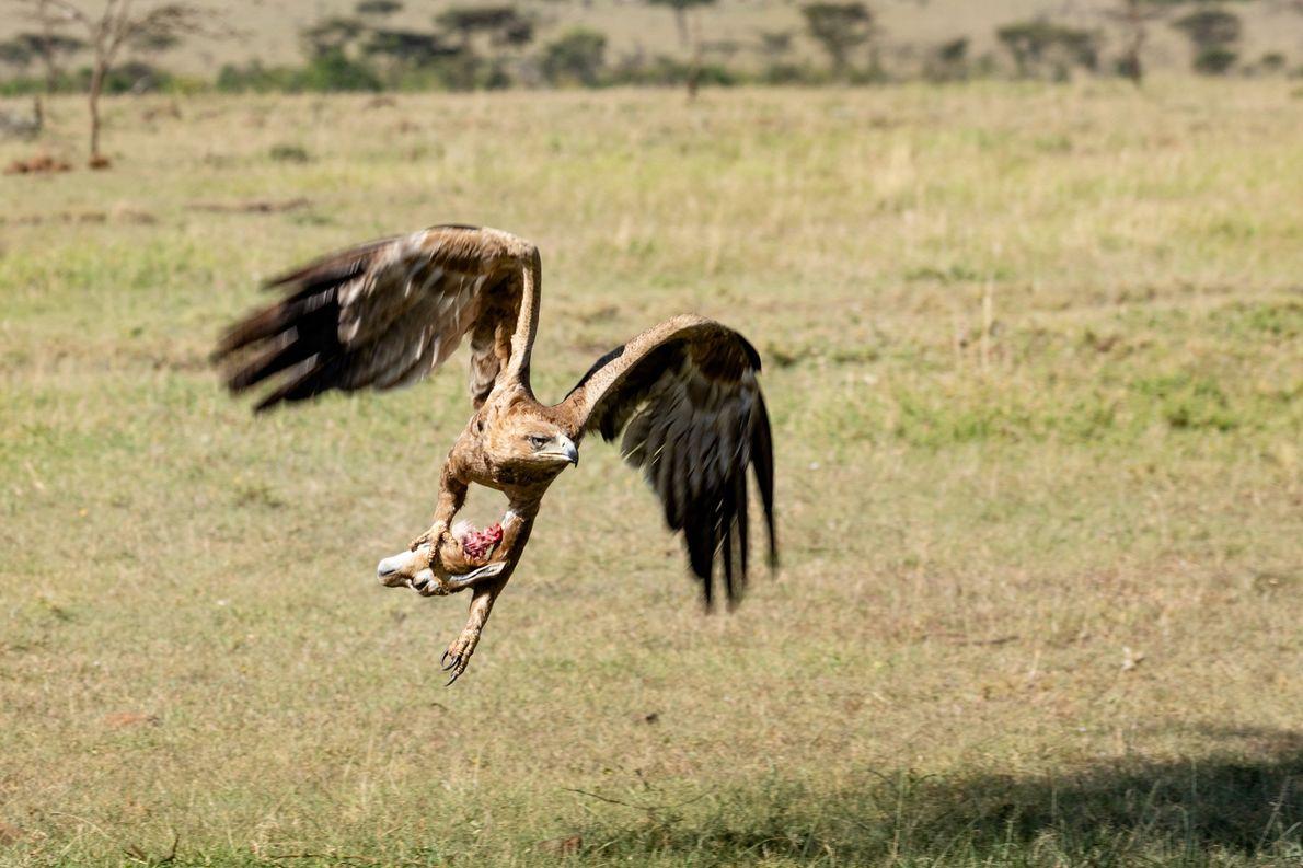 As áreas de conservação oferecem agora algumas das melhores experiências de safari.
