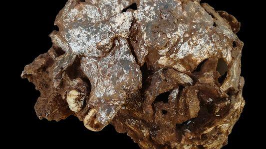 Túmulo de criança é o enterro humano mais antigo encontrado em África