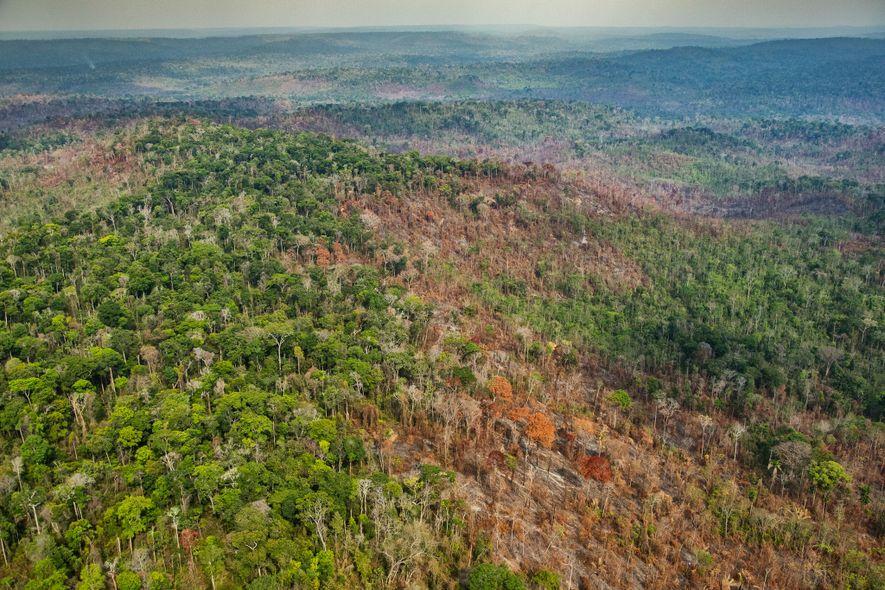 Danos provocados pelos incêndios no núcleo do Território Indígena Arariboia, que abriga cerca de 60 a ...