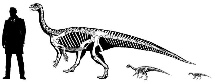Na sua infância, o dinossauro Mussaurus patagonicus apoiava-se nas quatro patas. Mas com o crescimento, o ...