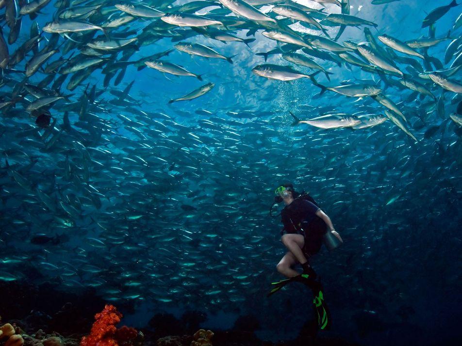 Os Melhores Lugares do Mundo para Mergulhar