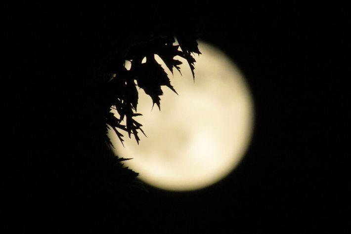 Faça com que a lua fique mais interessante fotografando-a com um objeto em primeiro plano, ou ...