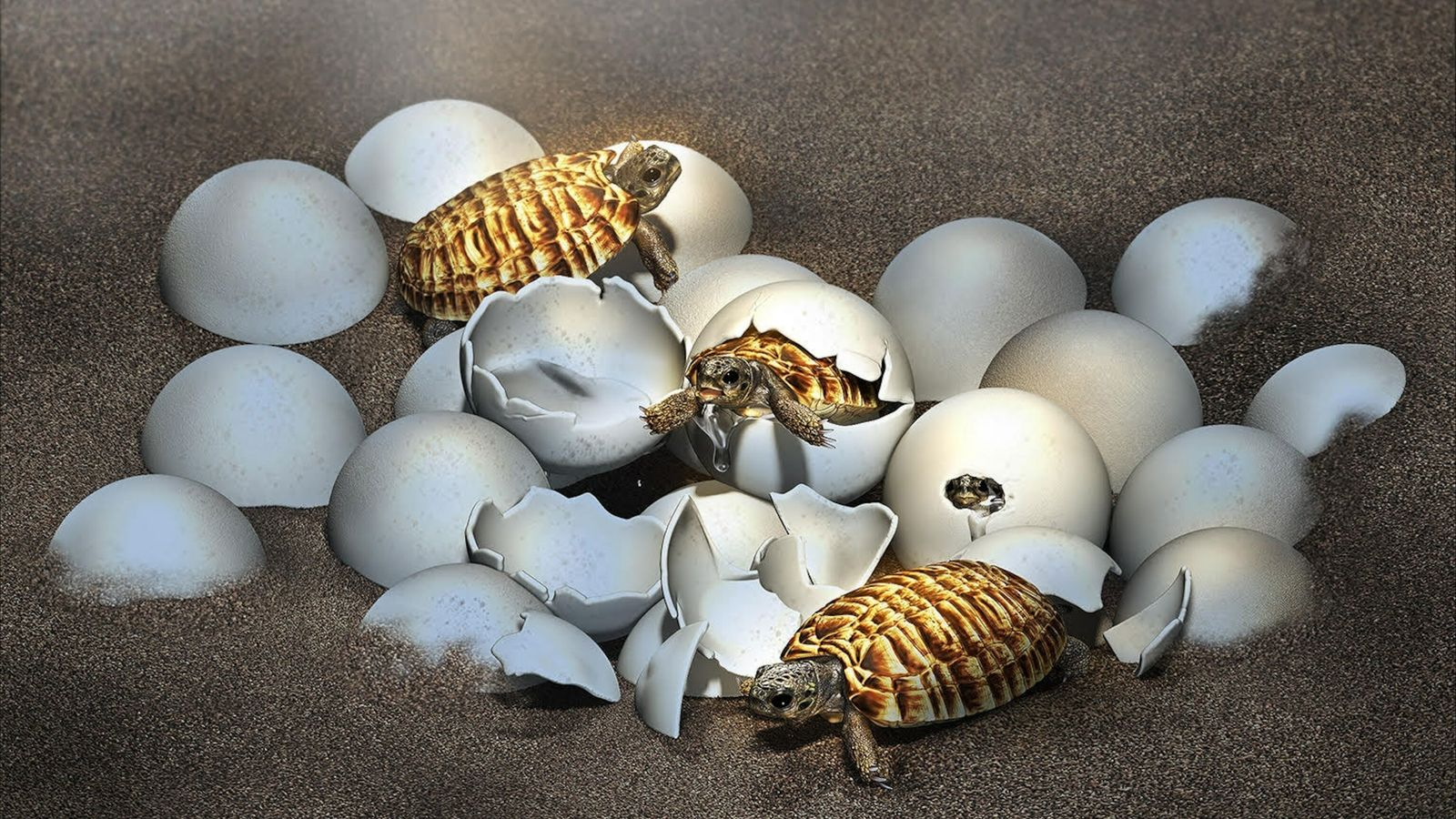 Um ovo fossilizado encontrado na China revelou uma surpresa no seu interior: o embrião de uma ...