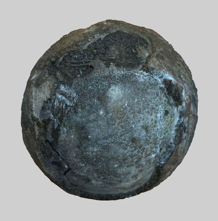 Este ovo fossilizado do período Cretáceo contém no seu interior um embrião raro de tartaruga.