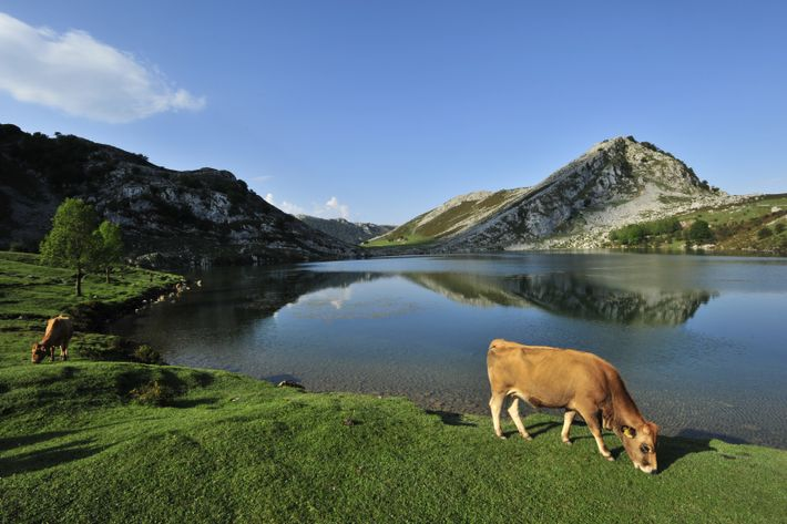 O Parque Nacional dos Picos de Europa é composto de paisagens com picos dramáticos, lagos plácidos ...