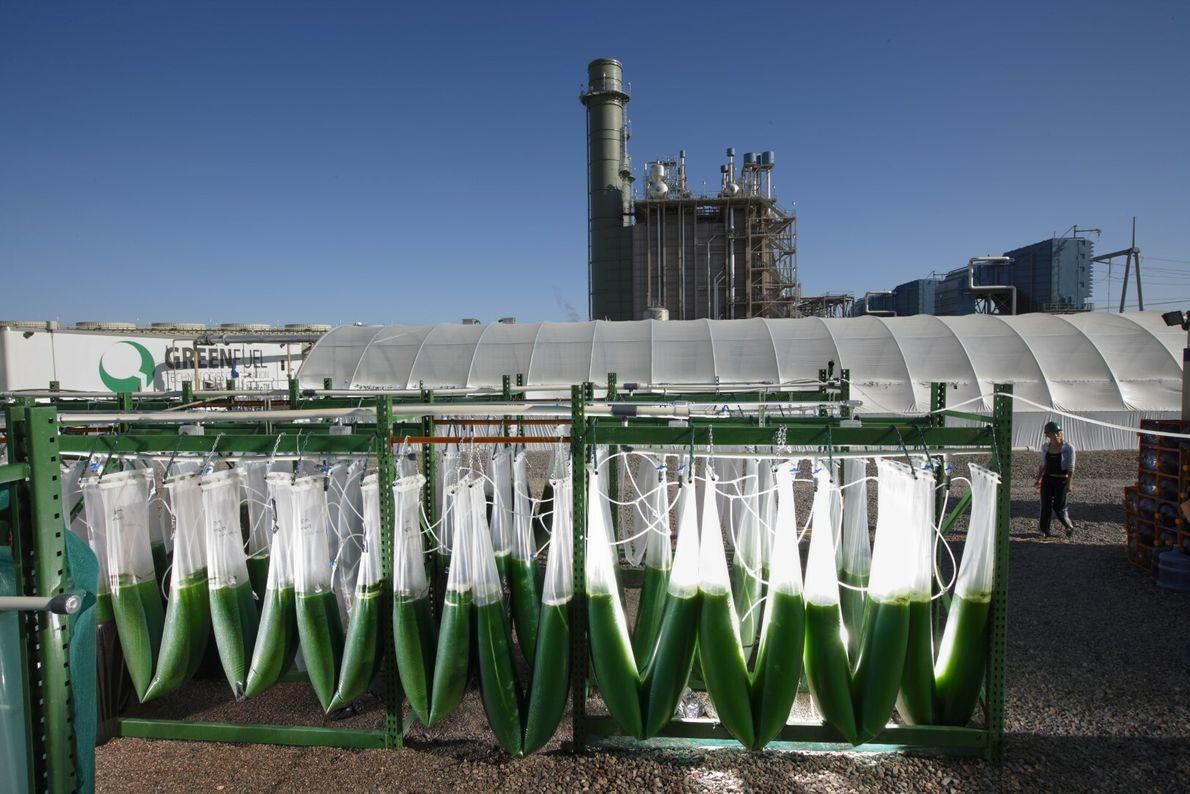 Sacos de biocombustível