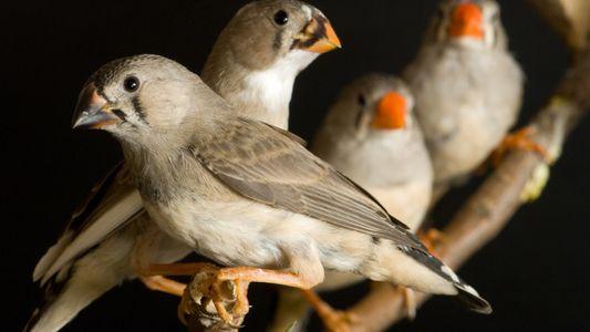 Universidade do Porto Cria Método Para Distinguir Aves