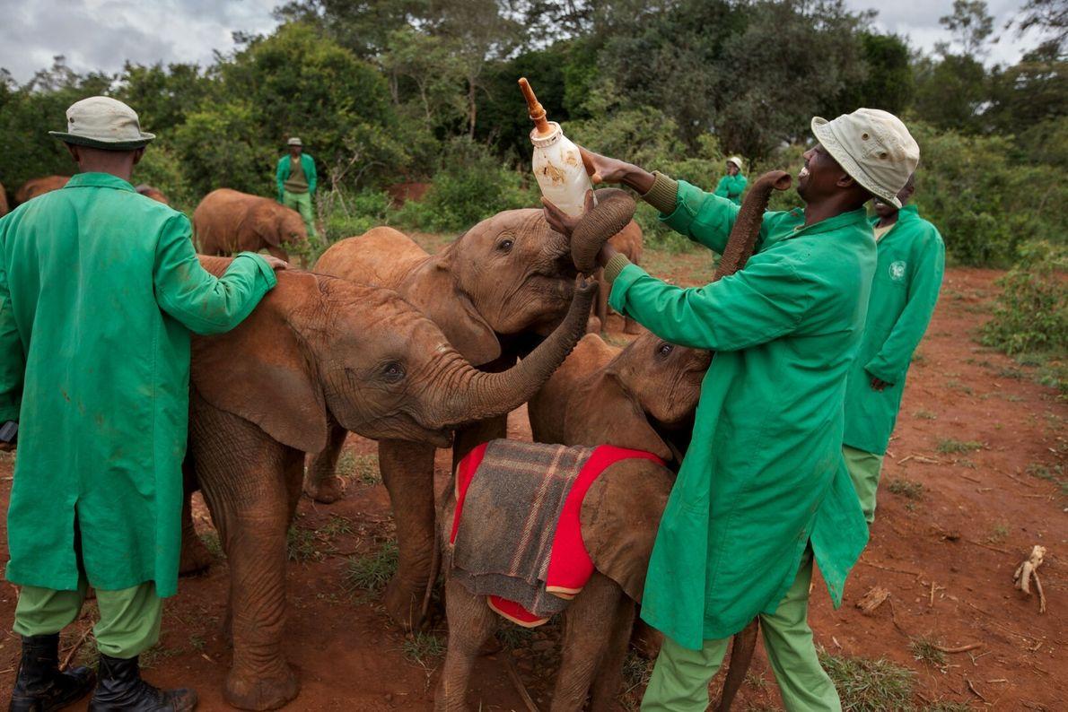 Salvar elefantes