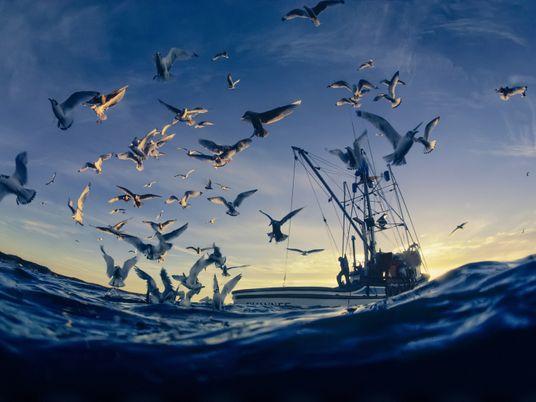 Como podemos ajudar corais e aves marinhas a sobreviver num mundo em aquecimento