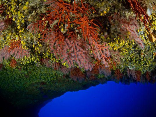Corais Vermelhos Vão Ter Proteção Ambiental em Portugal