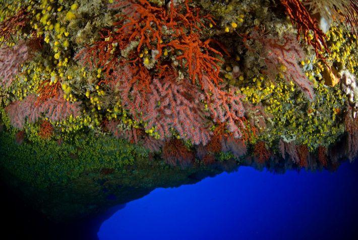 Existem apenas alguns sítios na costa portuguesa onde podem ser vistos corais vermelhos.